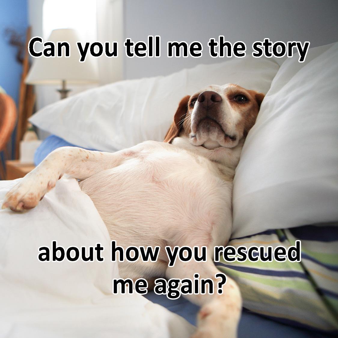 CO Beagle Rescue